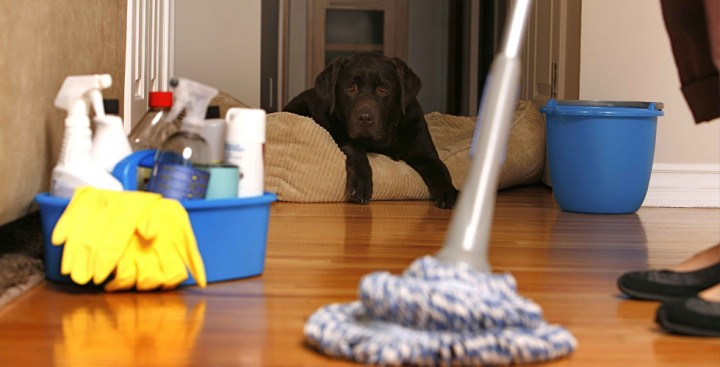 carpet cleaning Eltham